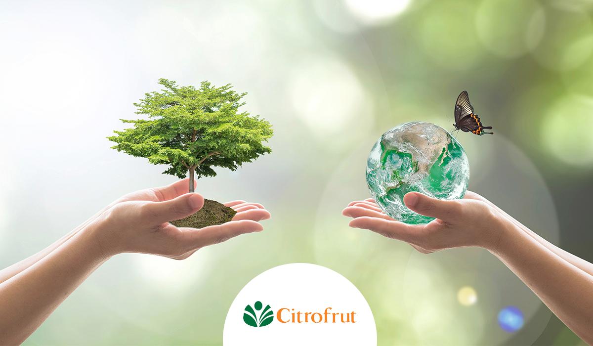 Energía renovable en Citrofrut